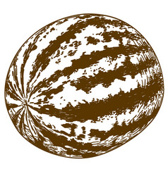 engraving of watermelon vector image