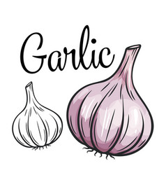 Garlic drawing icon vector