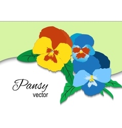 Pansy Floral Card vector image
