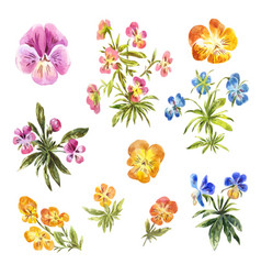 Set of watercolor little pansies isolated on white vector