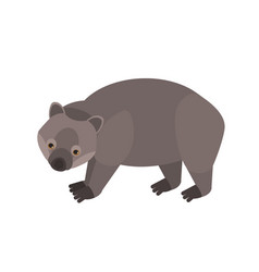 Wombat isolated on white background portrait vector