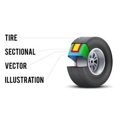 Car tire with layers sectional vector image vector image