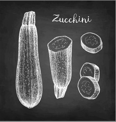 Chalk sketch zucchini vector