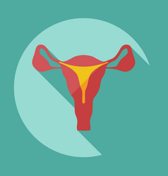 Flat modern design with shadow icons uterus vector