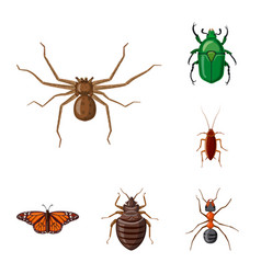 isolated object of insect and fly symbol vector image