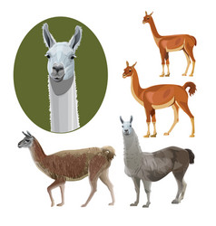 South american animals vector