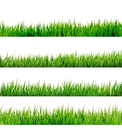 Grass isolated on white EPS 10 vector image