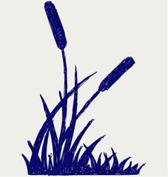 Swamp sketch vector image vector image