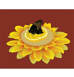 Black butterfly on the orange slice with flower vector