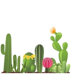 different types cactuses vector image