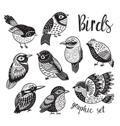 graphic set with hand drawn exotic birds vector image