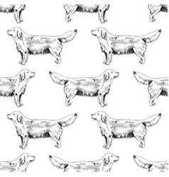hand drawn seamless pattern with golden retrievers vector image