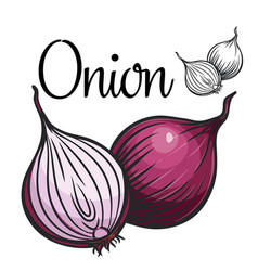 onion drawing icon vector image