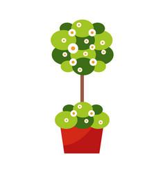 outdoor plant in pot exterior design decoration vector image
