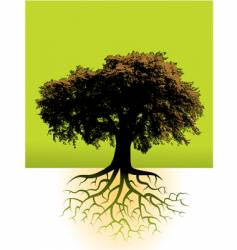 trees roots vector image