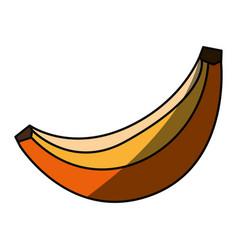 sweet banana fruit vector image vector image