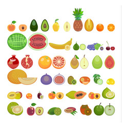 a set of fruit icons thirty-three species are vector image