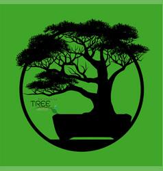 logo of bonsai tree vector image