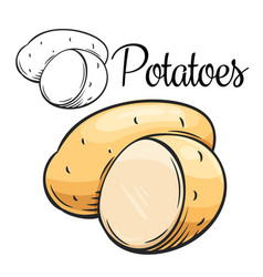 Potatoes drawing icon vector