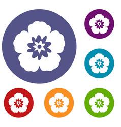 rose of sharon korean flower icons set vector image