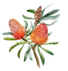 Watercolor banksia flower composition vector