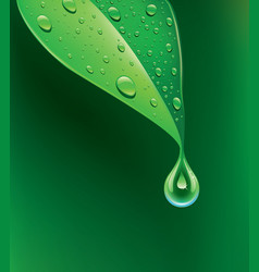 green leaf with many water drops vector image vector image