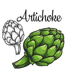 Artichoke drawing icon vector