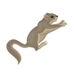 Detailed flat icon of cute sugar glider in vector