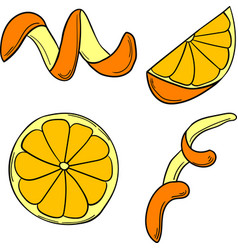 set of citrus in cartoon style vector image