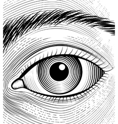 Engraving human eye vector image