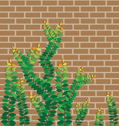 Green leaves on the brick wall vector image vector image