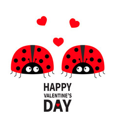Happy valentines day two cute red lady bug vector