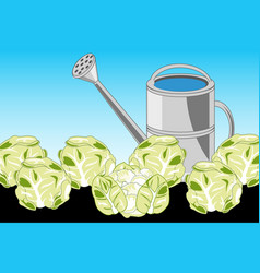 Harvest cabbage on area and sprinkling can vector