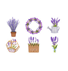 Lavender floral twigs tied in bunch growing in vector