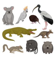 Set of wild australian animals and birds fauna vector