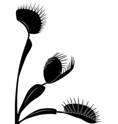 Venus flytrap vector