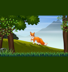 a fox looking for prey on hill vector image