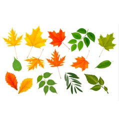 Colorful leaves collection vector