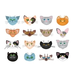Cute cat faces vector