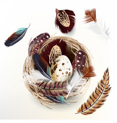 easter realistic nest eggs and feathers design vector image