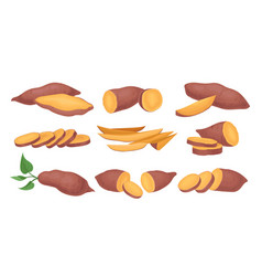 flat set of whole and sliced sweet potatoes vector image