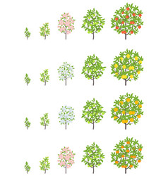 Fruit tree growth stages apple peach and lemon vector