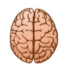 Head organ human brain top view vintage color vector