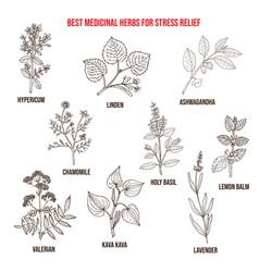 Best medicinal herbs for stress relief vector