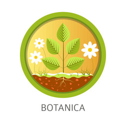 botanica school discipline informational lessons vector image