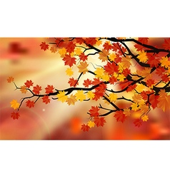 Bright colorful leaves on the branches vector image vector image