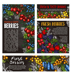 Wild forest and farm berry fruits vector