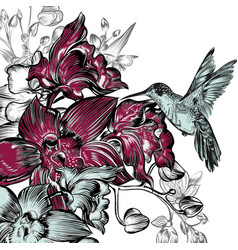 background with orchids and hummingbird vector image