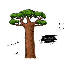 baobab tree drawing isolated hand drawn vector image