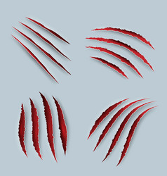 Claw scary scratches with blood tiger claws vector